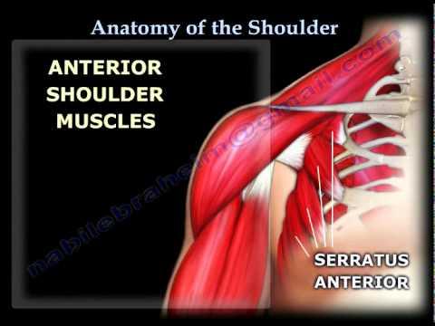 A Brief Description: Shoulder JointAnatomy